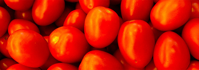 How to grow roma tomatoes