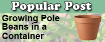 Grow Pole Beans in a Container