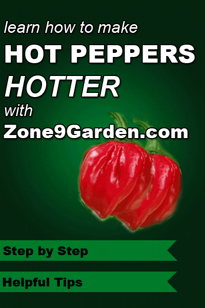 Learn how to grow hotter hot peppers with Zone9Garden.com.  Step by step instructions.