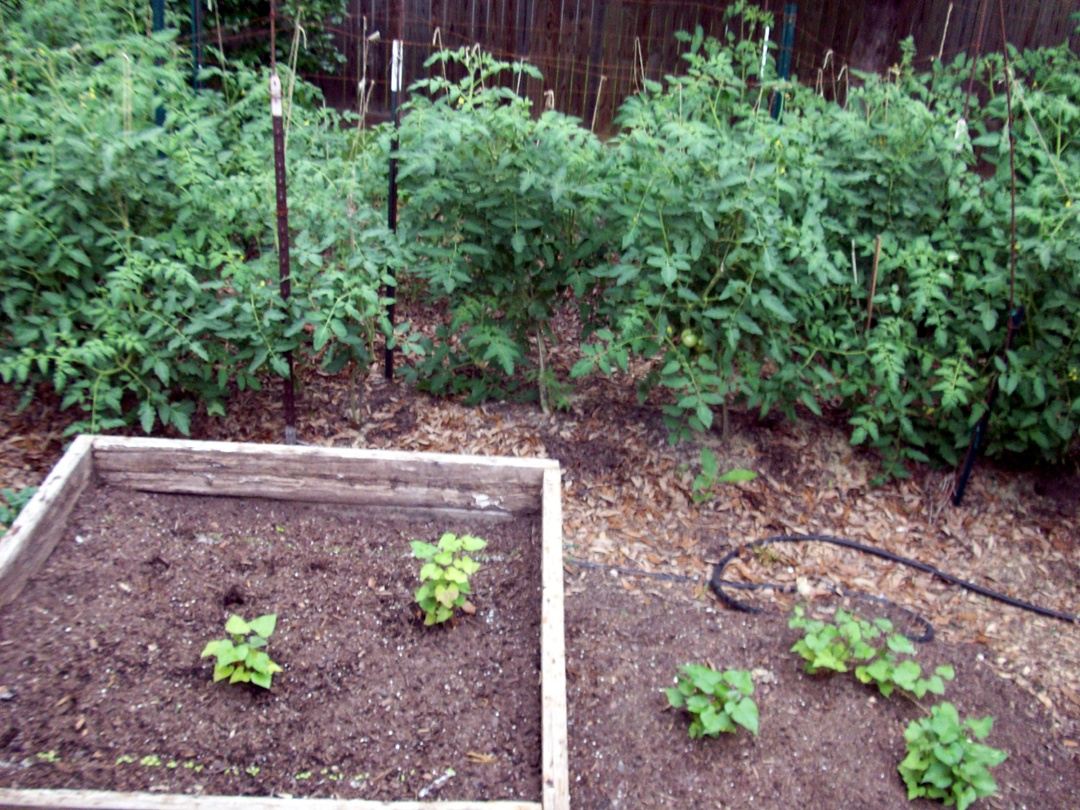 Starting a vegetable garden part 1 vegetable garden blog for Starting a vegetable garden