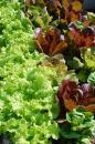 View The Leafy Greens Album