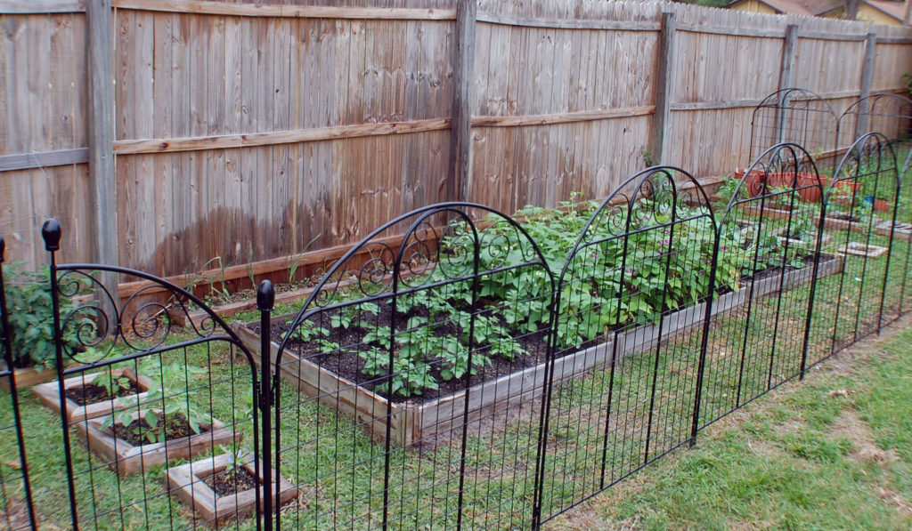 Zone 9 Fall Planting Guide Vegetable Garden Blog